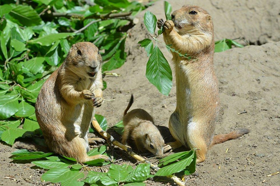 Psouni v děčínské zoo.