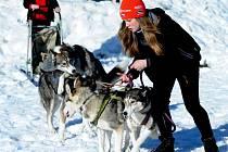 SOKOL MAXIČKY pořádal závody psích spřežení.