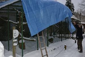 V děčínské zoo zakrývají ptačí expozice kvůli ptačí chřipce.