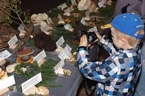Tradiční výstava hub se konala v kulturním domě ve Šluknově.