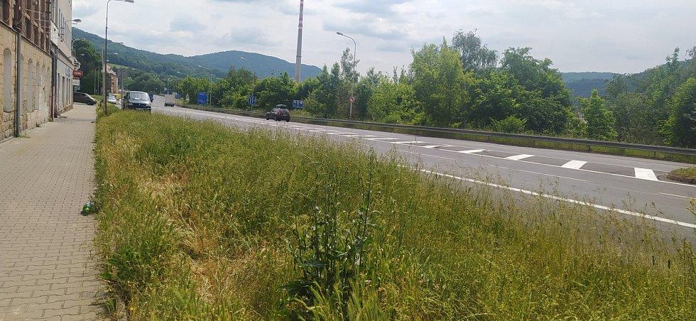 Přerostlá tráva v Děčíně - Benešovská ulice.