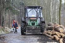 Těžba stromů. Ilustrační foto.