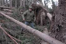 KYRILL NADĚLAL škodu především v lesích.