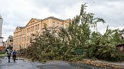 Řádění vichřice ve Varnsdorfu nevydržel 200 let starý buk.