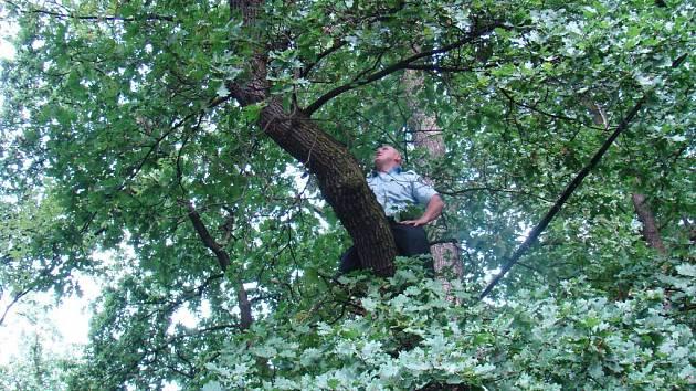 Kocoura, který uvízl na stromě zachránili strážníci spolu s hasiči