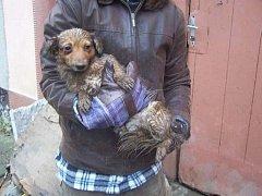 Smečku jednadvaceti psů ve Zvonovicích, která zůstala jako nechtěné dědictví po mrtvém člověku, čekal nemilý osud.