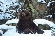 Děčínský medvěd Bruno.