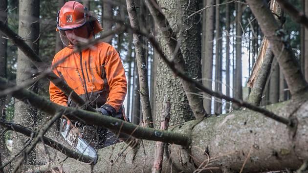 Kůrovec na Třebíčsku ničí lesy. Bude se kácet i sázet, přibudou brigády