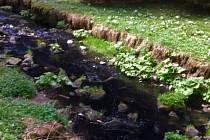 Řeku Křinice neznámá látka modře zbarvila.