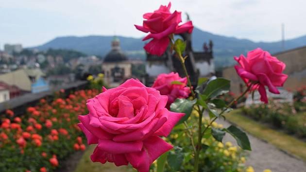 Den růží
