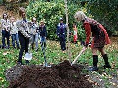 V Děčíně vysadili nový strom svobody.