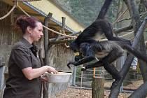 Zoo odstartovala 70. návštěvnickou sezonu.