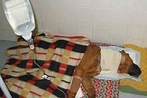 V děčínském psím  útulku skončil křížence pitbulla, kterého majitel nechal uvázaného v kotci.