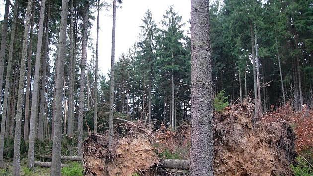V Národním parku České Švýcarsko Emma nalámala skoro tři a půl tisíce kubíku dřeva.
