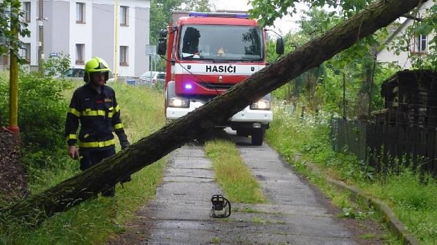Vyvrácený strom v Jílovém.