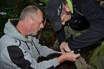 Zjišťování pohlaví a čipování veverek Prévostových v děčínské zoo.
