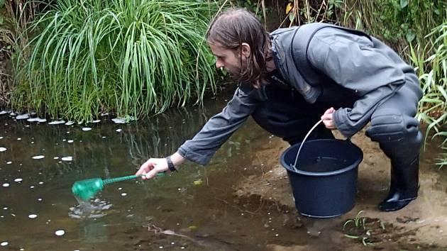 Vypouštění larev mihule potoční do řeky Křinice nad Horní splav.