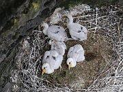 V národním parku se narodil rekordní počet mláďat čápů černých.