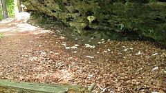 Odpadky v národním parku kromě strážců nově uklízí firma.