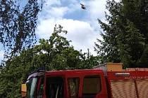 Holuba z vlasce vysvobodili přivolaní hasiči.