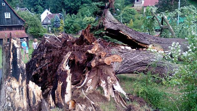 V Jetřichovicích vítr vyvrátil stoletou lípu