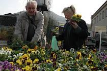 Odborníci radí, aby si lidé před nákupem květin sadbu řádně prohlédli.