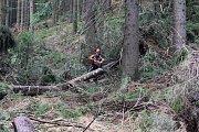 Na silnici ze Hřenska na Mezní Louku spadly desítky vzrostlých stromů.