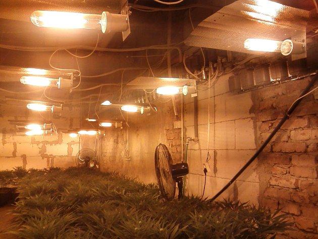 Celníci v Děčíně zabavili 1000 rostlin konopí a 5 kg marihuany.