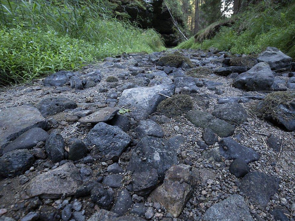V Brtnickém potoce hynou ryby, na vině je zřejmě dlouhotrvající sucho.