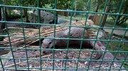 Vydry v děčínské zoo nějakou dobu návštěvníci neuvidí.