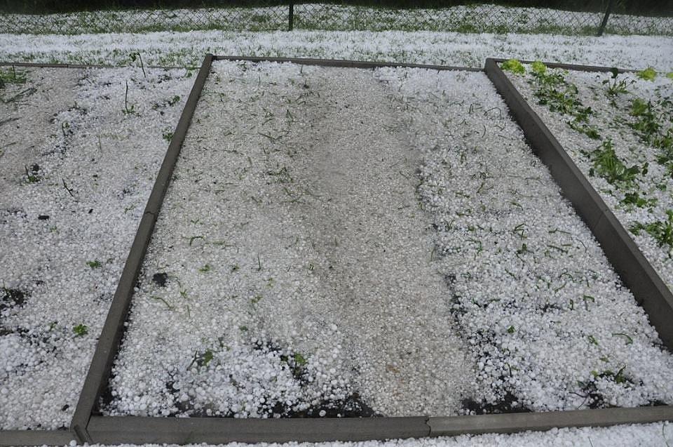 Kroupy poničily v Ludvíkovicích zahrady.