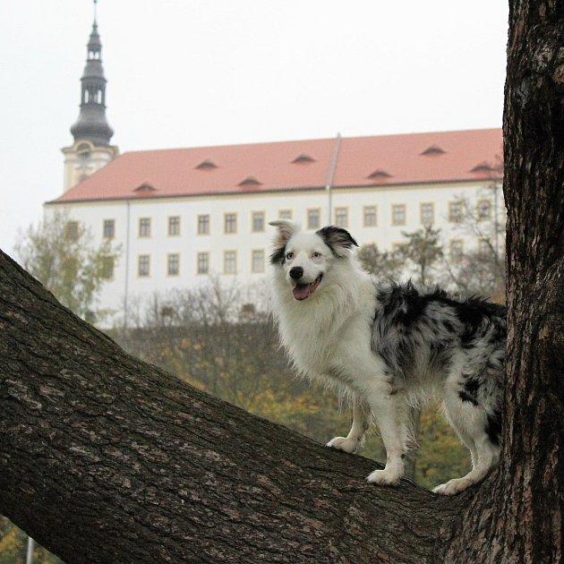 Tereza Kamínková a její pes Lukas na Mariánské louce vDěčíně.