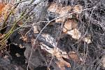 Déšť způsobil pád stromů na Mariánské louce v Děčíně.