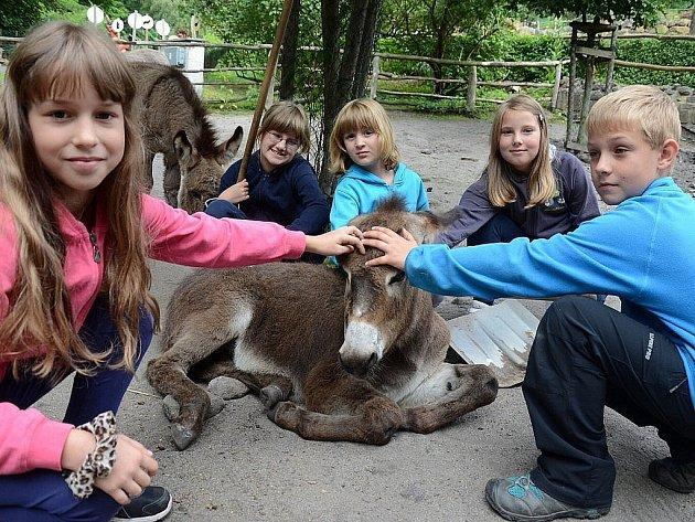 Příměstský tábor v děčínské zoo, který proběhne od 23. do 27. července, byl vyprodán za půl hodiny. Ilustrační foto.