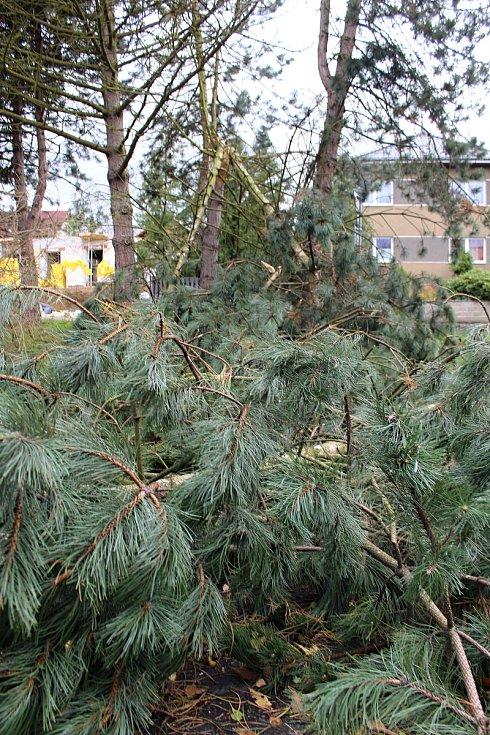 Několik stromů popadalo i na sídlišti v Želenicích.