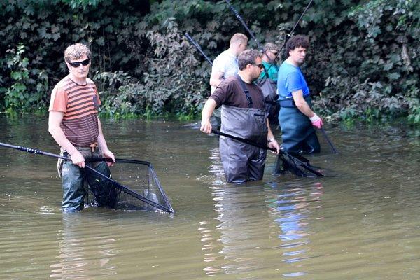 Rybáři zachraňovali vDěčíně na Mariánské louce uvízlé ryby.