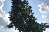 Benešovští hasiči pokáceli strom.