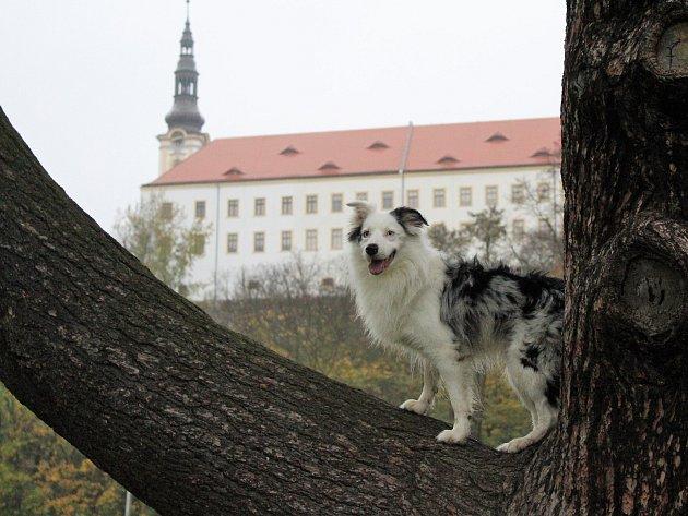 Lukas ochotně zapózoval redaktorce Děčínského deníku.