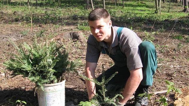 Obnova lesních porostů