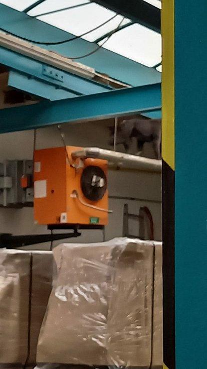 Z děčínské zoo utekl makak.