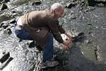 Jeden z dobrovolníků se v pátek dopoledne pustil do záchrany ryb, které měly problémy v malé vodě přežít.