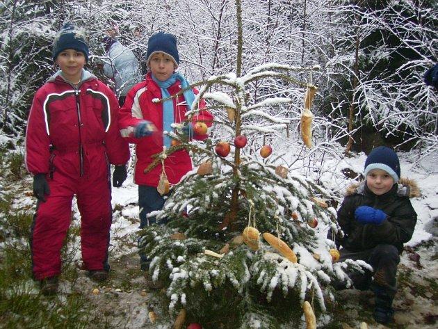 S vánoční nadílkou vyrazili do lesa