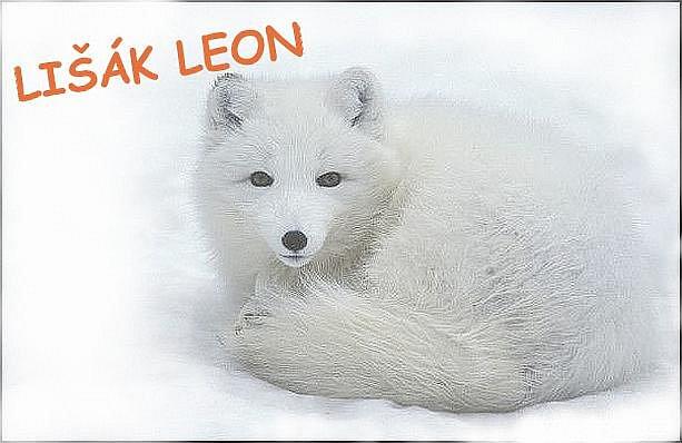 Lišák Leon - možný maskot BK Děčín.