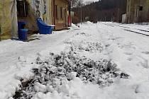 Divočáci pravidelně řádí například v Mlýnech, části obce Kytlice.