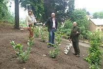 Nad čerstvě vysazenými stromy se sešlo vedení města: místostarostka Hana Štejnarová, starosta Martin Hruška a tajemník MěÚ Lubomír Tůma.