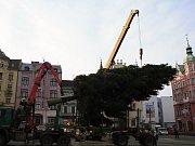 Letošní největší vánoční strom v Děčíně přivezli z Labské Stráně.