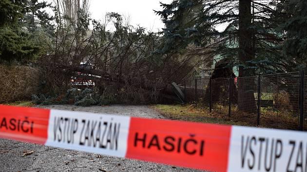 Polámané stromy po Okránu Sabine v Děčíně.