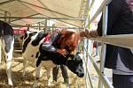 V areálu školy v Libverdě se koná tradiční zemědělská výstava.