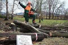 Kácení stromů v zámeckém parku.