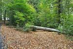 Následky silného větru, který zasáhl severní Čechy 5. října.